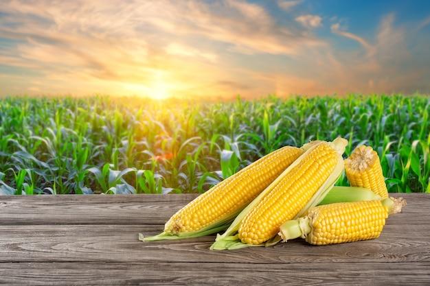 Reifer mais auf einem holztisch vor dem hintergrund eines maisfeldes
