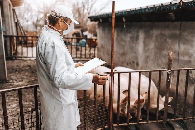 Reifer tierarzt im weißen kittel, der zwischenablage hält und gesundheit von schweinen in cote prüft. land außen.