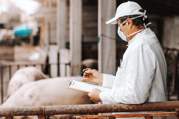 Reifer tierarzt im weißen kittel, der zwischenablage hält und gesundheit von schweinen überprüft, während er in cote steht. land außen.