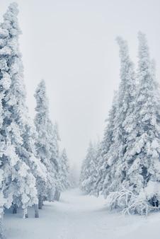Reihe schneebedeckter fichten