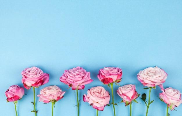 Reihe von den rosa blumen angeordnet auf blauer oberfläche
