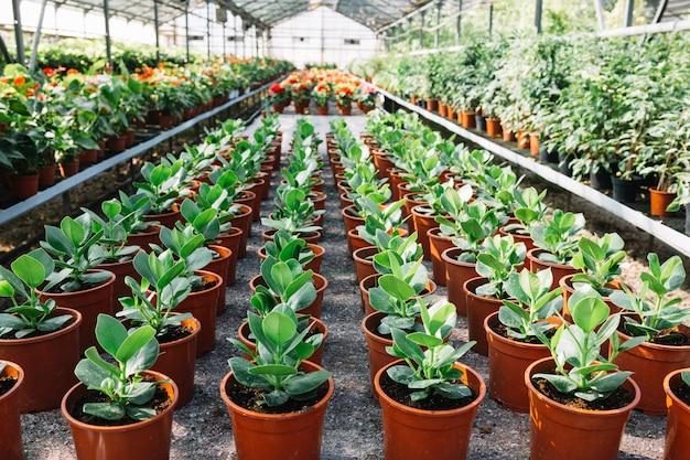 Reihe von frischen grünpflanzen im topf