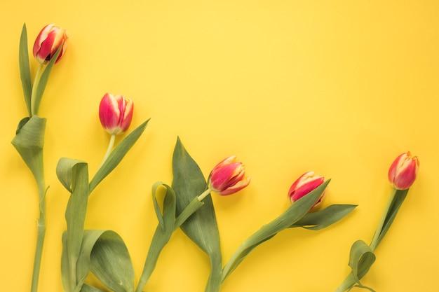 Reihe von frischen tulpen mit grünen blättern