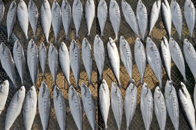 Reihen von trockenfisch aus dem meer für lebensmittel.
