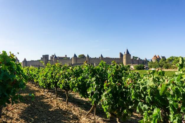 Reihenrebtraube in den champagnerweinbergen bei carcassonne