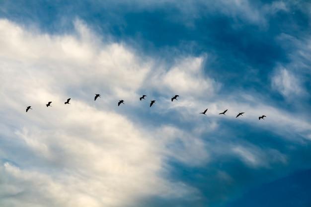 Reiher, der nach hause auf weicher wolke des weißen blauen himmels fliegt