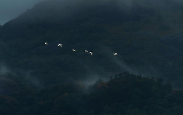 Reiher fliegen in den nebligen bergen von western ghats, kanyakumari bezirk, indien