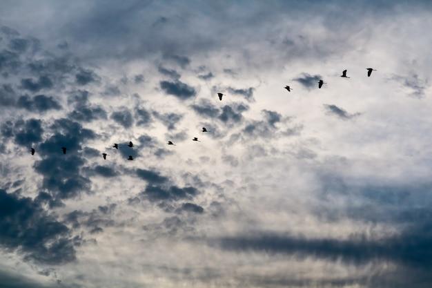 Reiherfliegen, zum auf weißer wolke des blauen himmels weich zu machen