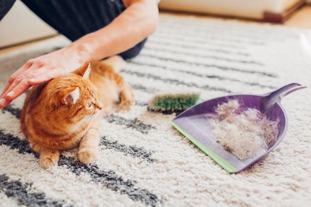 Reinigung teppich von katzenhaar mit bürste zu hause. mann reinigt schmutzigen teppich legt tierfell in schaufel.