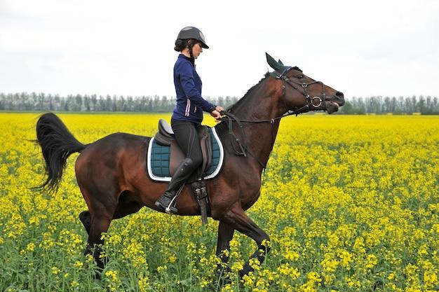 Reinrassiges pferd mit reiter auf einem rapsfeld