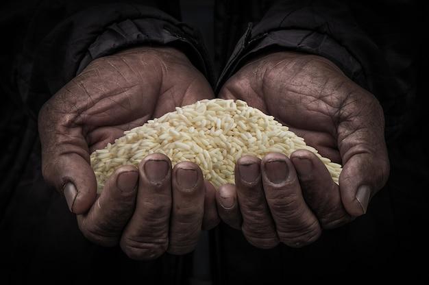 Reis in den händen des landwirts, gemahlener reis auf der personenhand alt