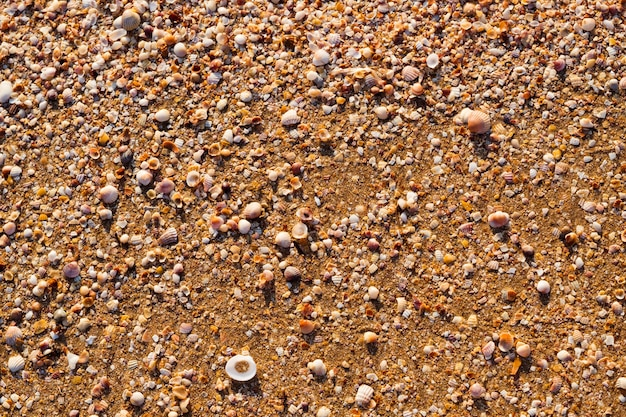 Reise reise tourismus freizeit. sommerferienziel am meer. goldener sand und muschelstrand.