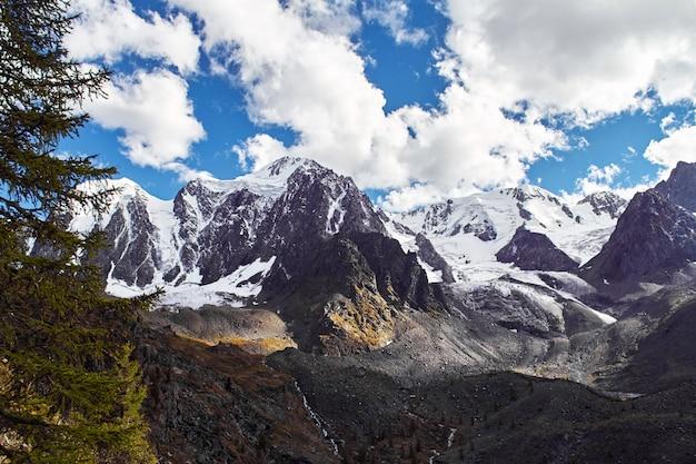 Reise zu fuß durch die gebirgstäler. schönheit der tierwelt. altai, die straße zu shavlinsky seen, russland. gipfel der schneebedeckten berge sibiriens. wandern in den bergen im sommer
