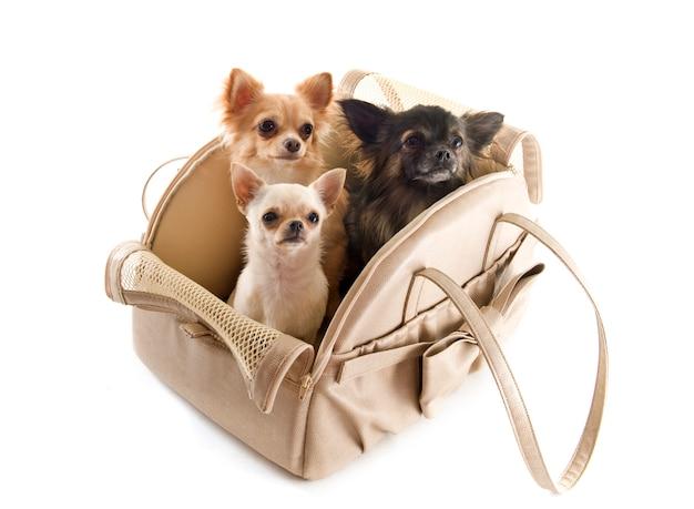 Reisetasche und chihuahua
