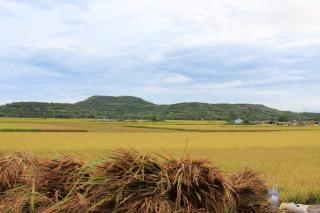 Reisfeld landschaft