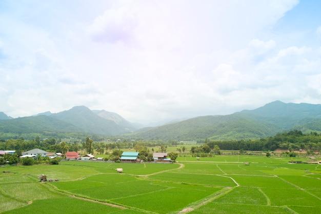 Reisfeld mit dorf im ländlichen thailand.