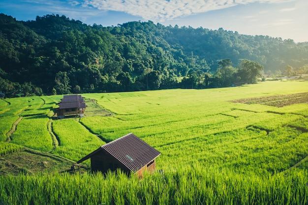 Reisfeld mit traditionellen häusern