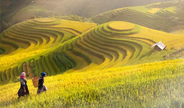 Reisfelder auf der terrasse von mu cang chai