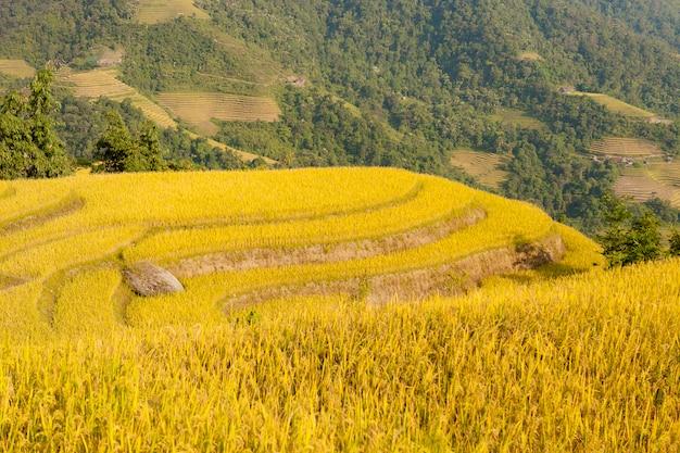 Reisfelder auf terassenförmig angelegtem von khuoi my, ha giang-provinz, nord-vietnam
