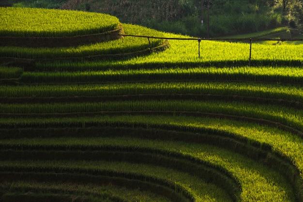 Reisfelder auf terassenförmig angelegten von mu cang chai, yenbai, vietnam