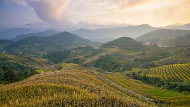 Reisfelder auf terrasse in der regenzeit bei mu cang chai, yen bai, vietnam