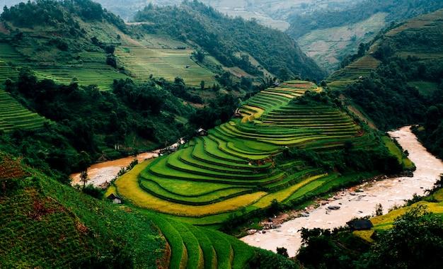 Reisfelder auf terrasse in der regenzeit bei mu cang chai, yen bai