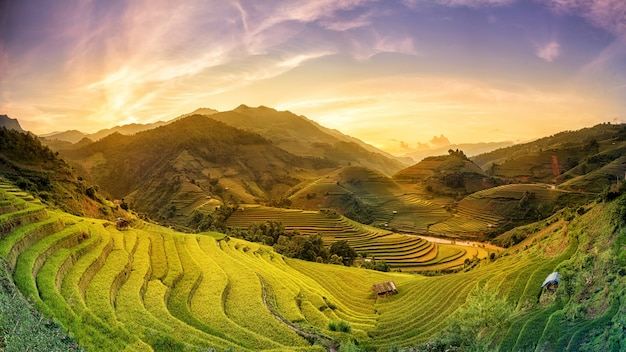 Reisfelder auf terrassiert im sonnenuntergang bei mu chang chai, yen bai, vietnam