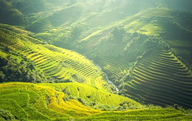 Reisfelder bereiten die ernte in nordwestvietnam vor. vietnam landschaften.