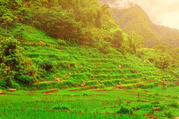 Reisfelder in nepal