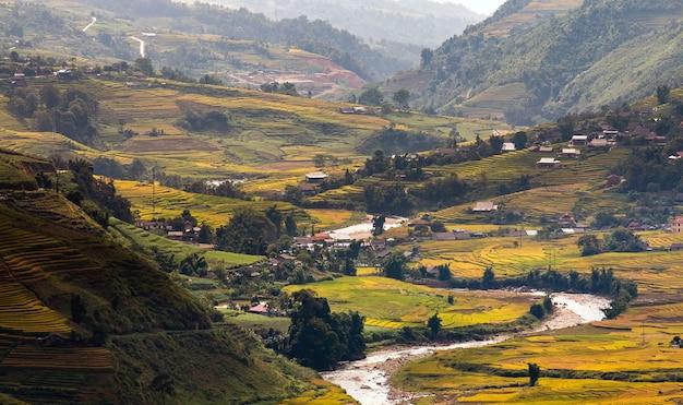 Reisfelder in nordwest-vietnam