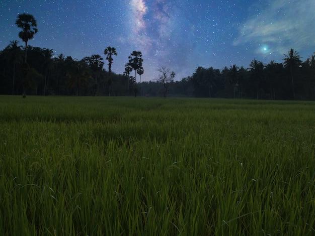 Reisfelder und milchstraße