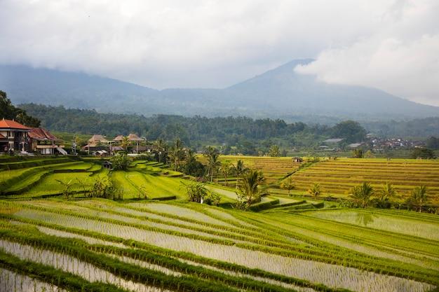 Reisfelder von jatiluwih in südost-bali