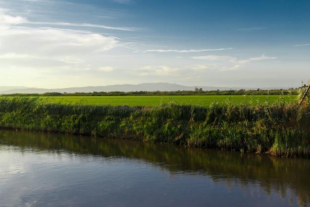 Reisfelder, wasserkanal zu wasser im detail aus delta del ebro, katalonien