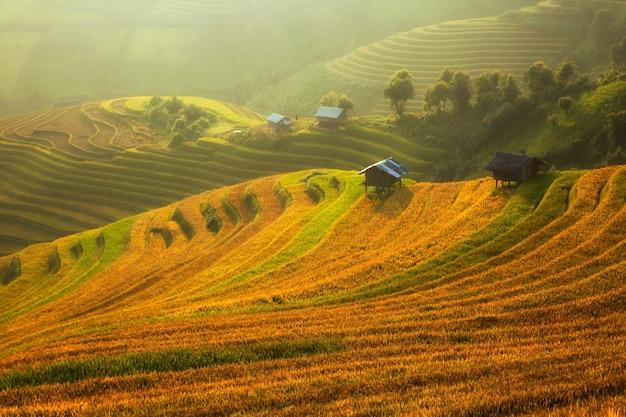Reisfeldplantage im morgensonnenaufgang.