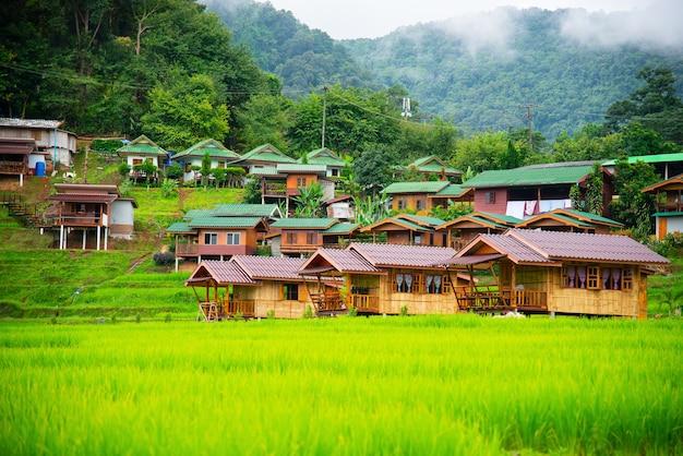 Reisfeldterrassen bei mae klang luang, gastfamilie chiangmai, thailand