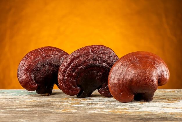 Reishi oder lingzhi pilz auf orange hintergrund.