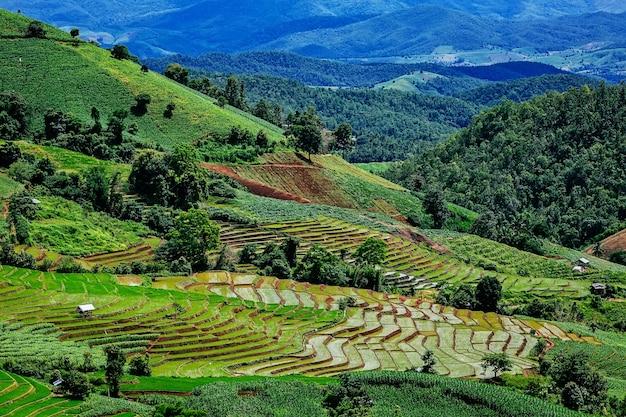 Reisterrasse in der landschaft von thailand und im berg umgeben.