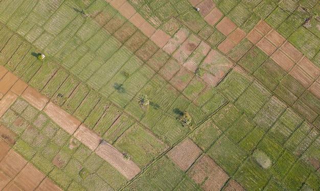 Reisterrasse luftaufnahme. bild des schönen terrassenreisfeldes