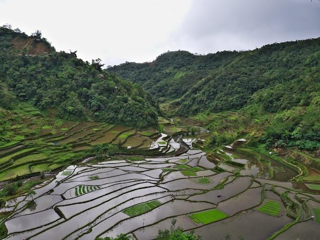 Reisterrassen in banaue in philippinen