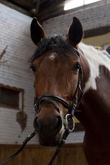 Reiten. porträt eines pferdes in einem stift.