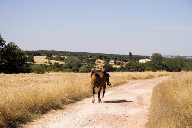 Reiter pferd