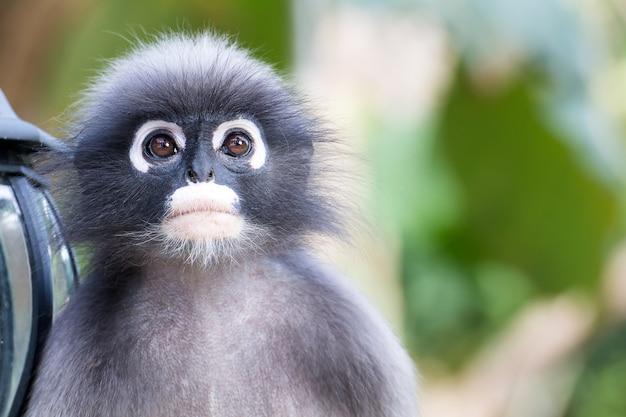 Reizende affen, nette makakengläser, lustiger affe lebt in einem naturwald von thailand
