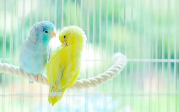 Reizende kleine papageien, die zusammen auf stringin käfig sitzen.