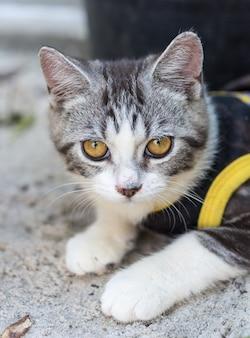 Reizende nette kleine katze mit schönen gelben augen auf weißem sand im garten im freien