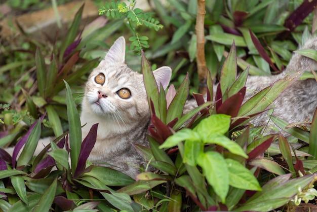 Reizende nette kleine katze mit schönen gelben augen im garten, der nach vögel im freien sucht