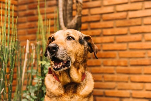 Reizender hund, der im garten aufwirft