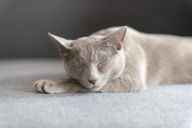 Reizendes kätzchen, das auf bett schläft.
