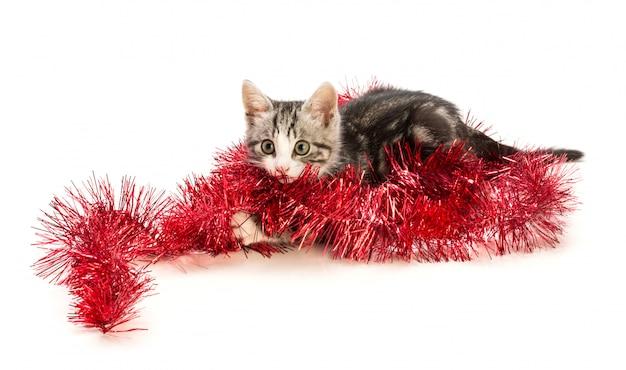 Reizendes kätzchen mit weihnachtsdekoration
