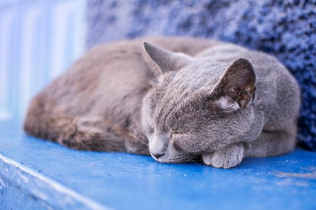 Reizendes porträt einer grauen katze, schlafend