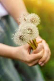 Reizendes sommerbild einer weiblichen hand, die löwenzahn gegen grashintergrund hält